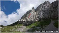 Rosakante-39