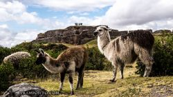 Cusco-103