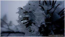 Gaisalpsee-13